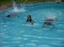 Schwimmkurs 02-04/2013